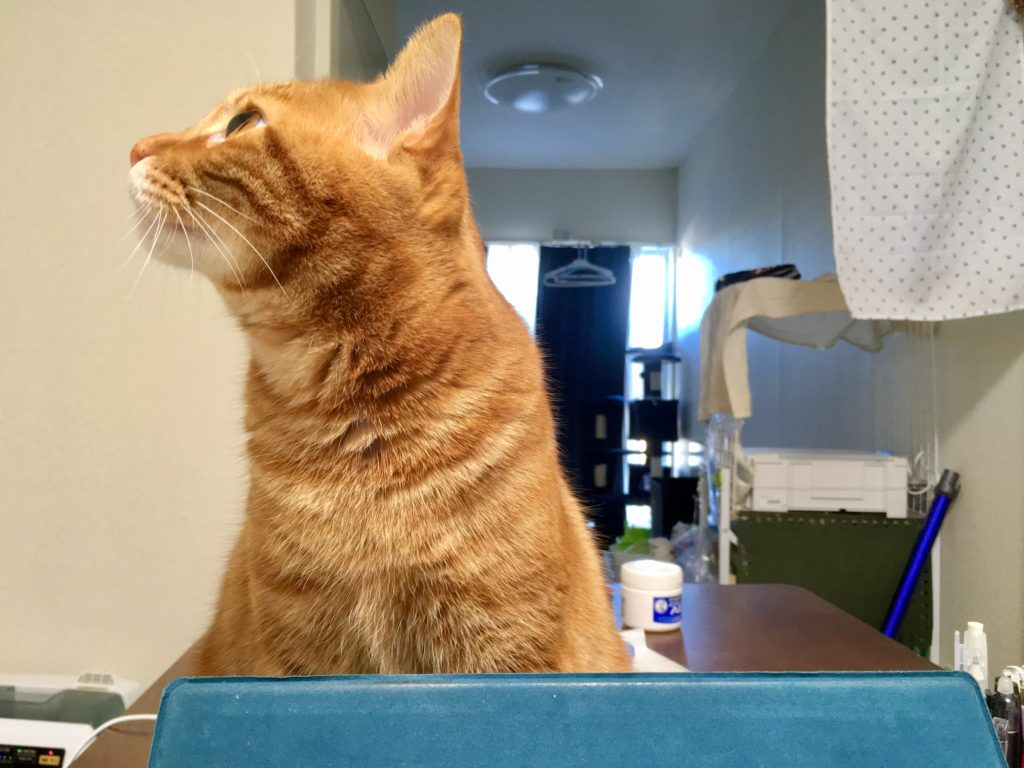 見 くる て じっと 猫